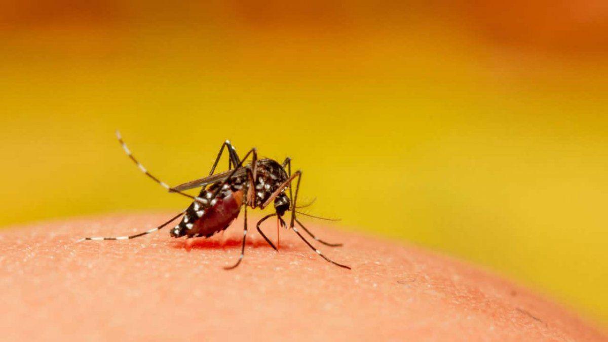 Ya son 13 los casos de dengue en el año