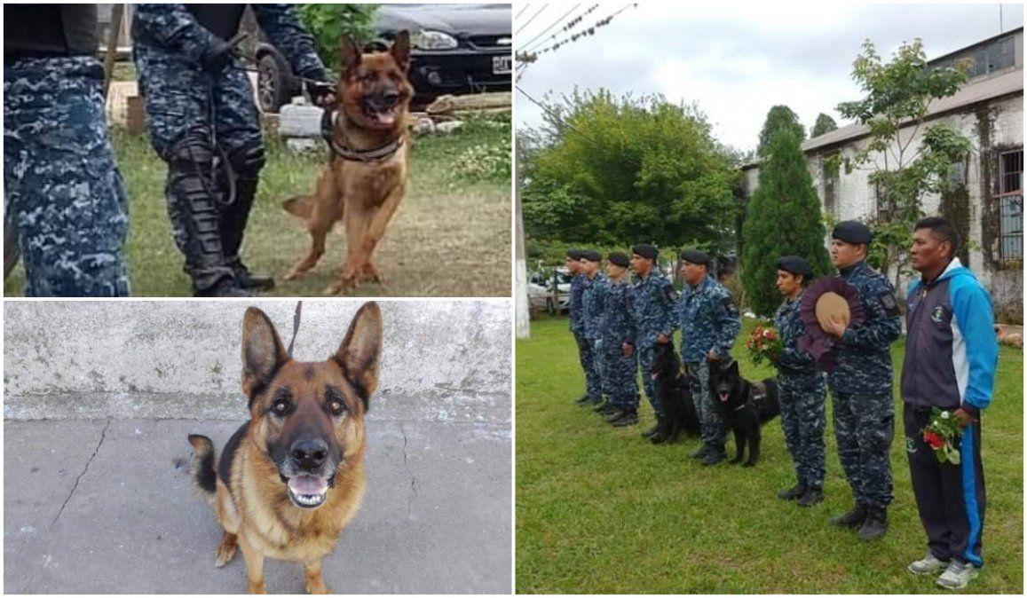 Murió el sargento Valentino, el ovejero alemán que sirvió a la policía jujeña