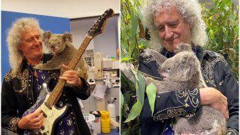 Integrante de Queen ofreció un concierto a koalas rescatados y enterneció a todos