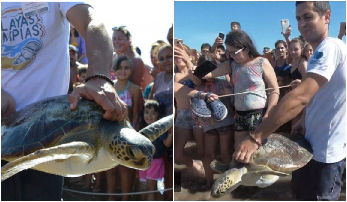 Tortuga que comió 14 gramos de plástico regresó al mar