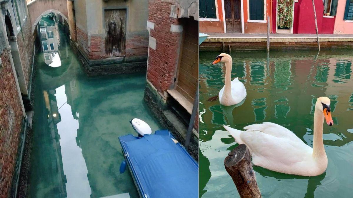 Venecia luce sus canales cristalinos — Cuarentena por coronavirus