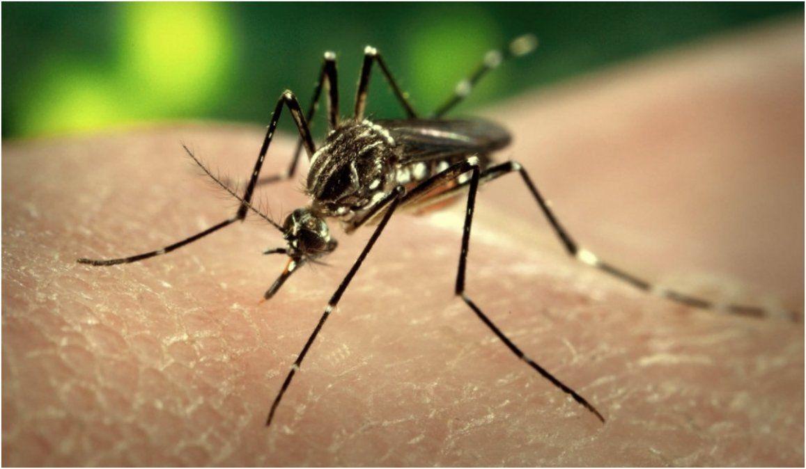 En Jujuy ya son 98 las personas con dengue, 8 casos son de la capital
