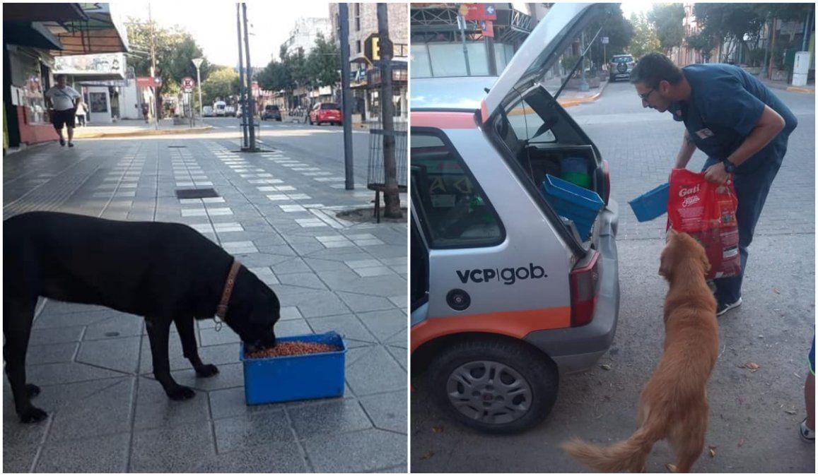 Córdoba: por la cuarentena, el municipio reparte alimento a perros callejeros