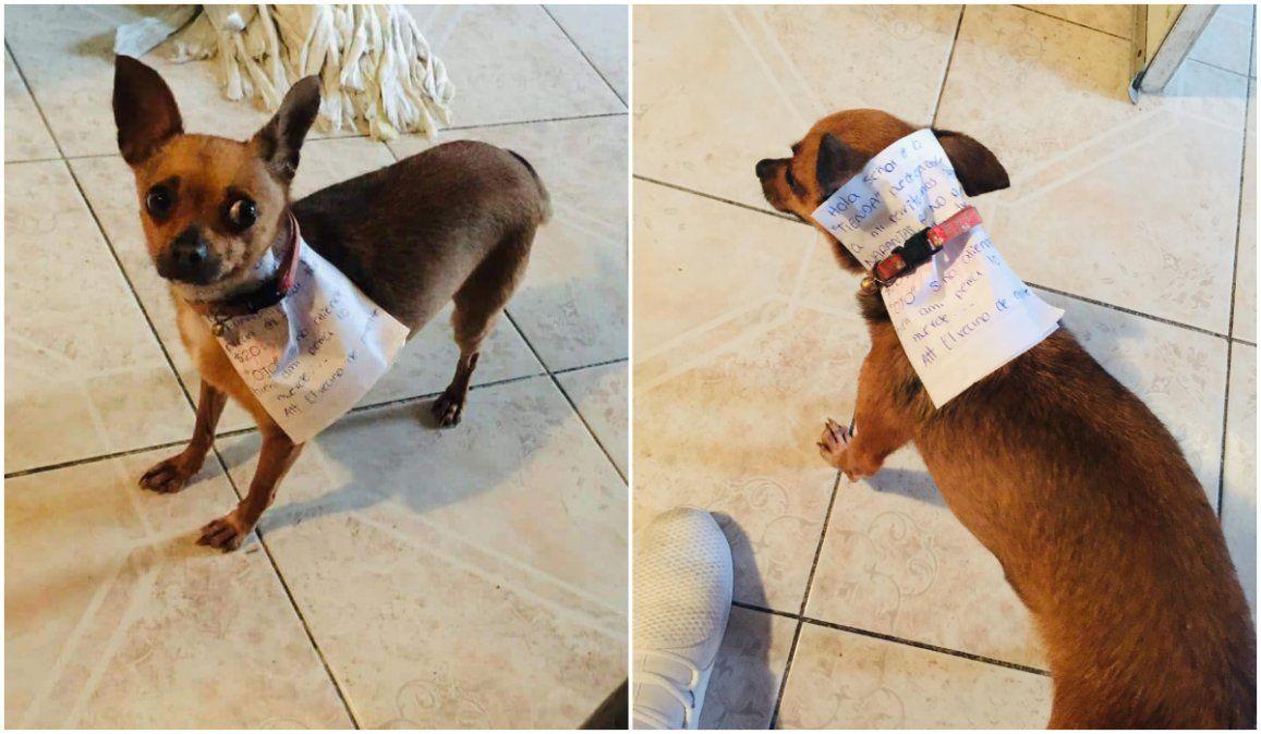 Cuarentena: para no salir de su casa mandó a su perro a la tienda