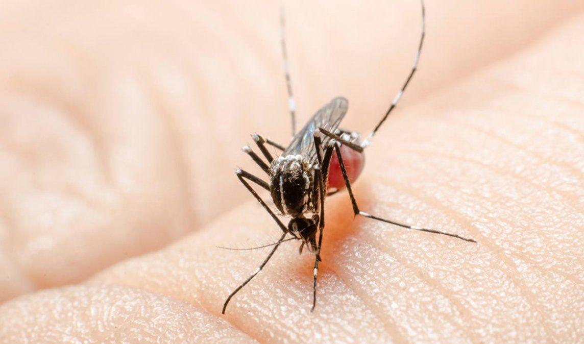 Ya son 4.652 los casos de dengue en Jujuy