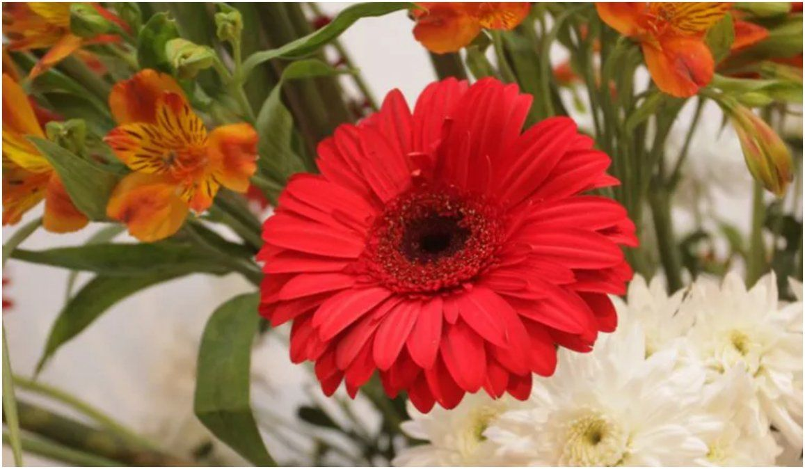 Pampa Blanca contará con un punto seguro de comercialización para floricultores