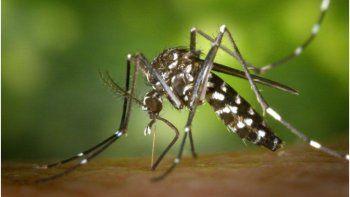 Dengue: Jujuy a la cabeza en cantidad de casos por número de habitantes