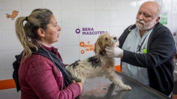 Covid-19 y las mascotas: ¿Los perros y los gatos pueden contagiarse con coronavirus?