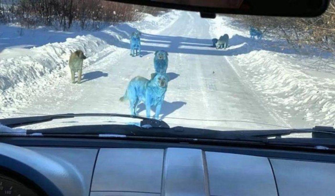 Apareció jauría de perros azules brillantes y se convirtió en viral