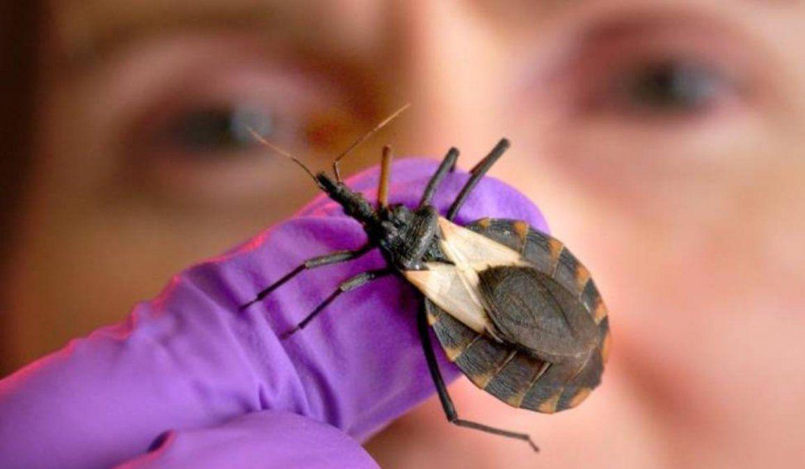 La Enfermedad de Chagas afecta a todas las clases sociales