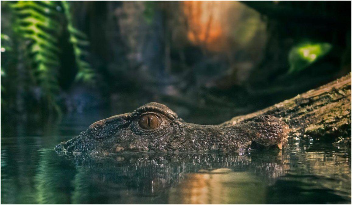 Espanta a un cocodrilo de 4 metros apodado cariñosamente Crujehuesos y la aventura se hace viral