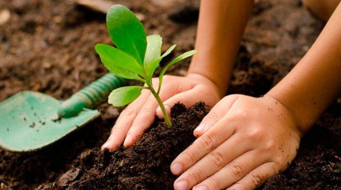 Plantarán un arbol por cada nacimiento en Jujuy