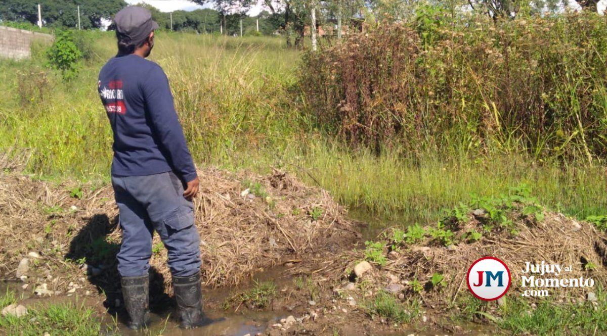 Barrios palpaleños que son una selva: las víboras atacan hasta los perros