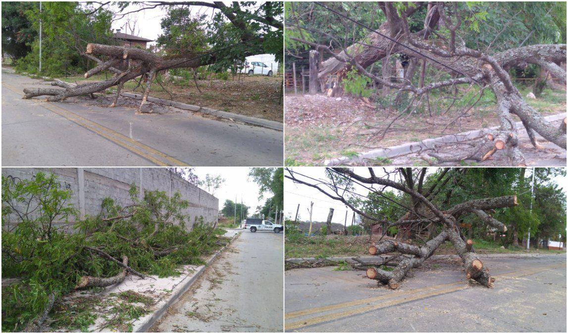 Fuertes vientos, caídas de árboles y cortes de energía en distintos puntos