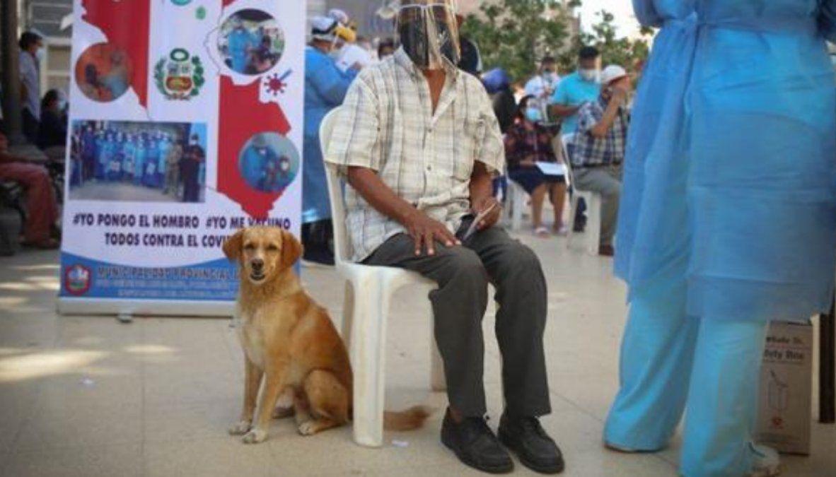 Viral: un abuelo fue a vacunarse contra el Covid-19 acompañado por su perro