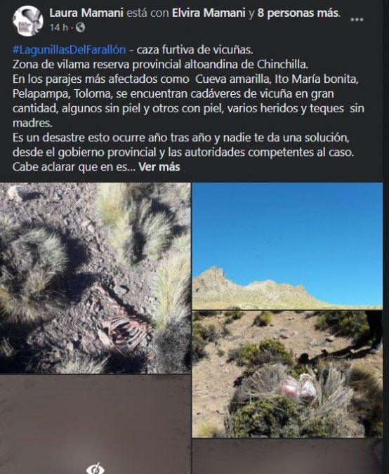 Denuncian caza furtiva de vicuñas en la Puna