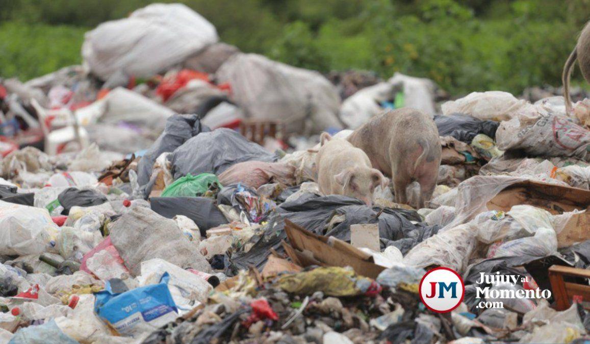 Chanchillos no está funcionando: Concejal expuso el desmanejo de la basura en Jujuy