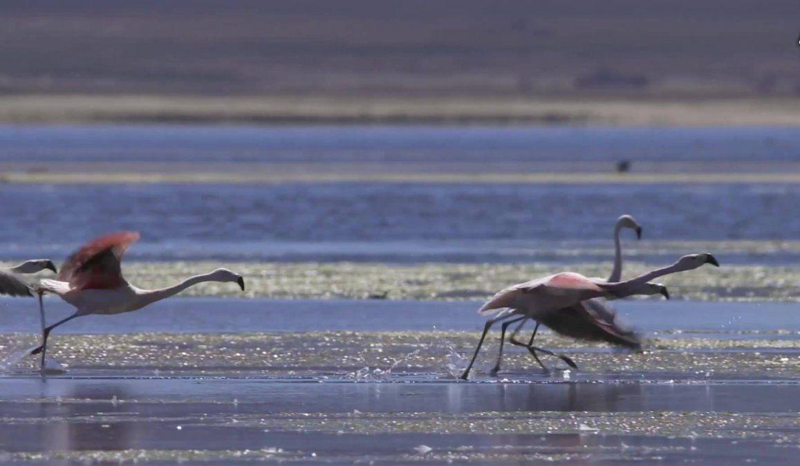 Tres turnos diarios para visitar la Laguna de Pozuelos