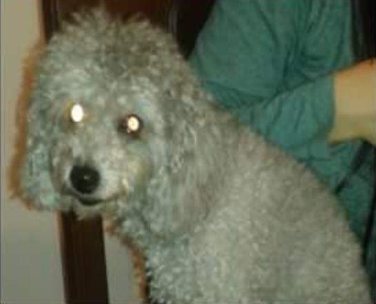 Familia angustiada por que desapareció su mascota