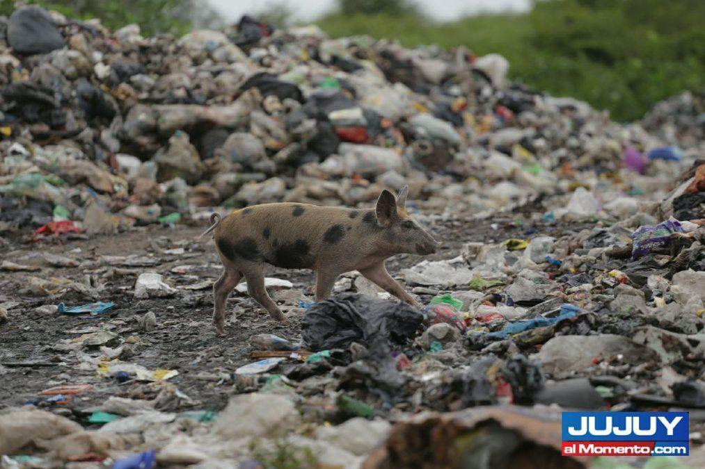 Impresionante cantidad de basura en Finca El Pongo