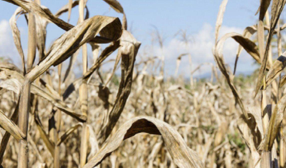 Pequeños productores afectados por sequías y falta de previsión del gobierno