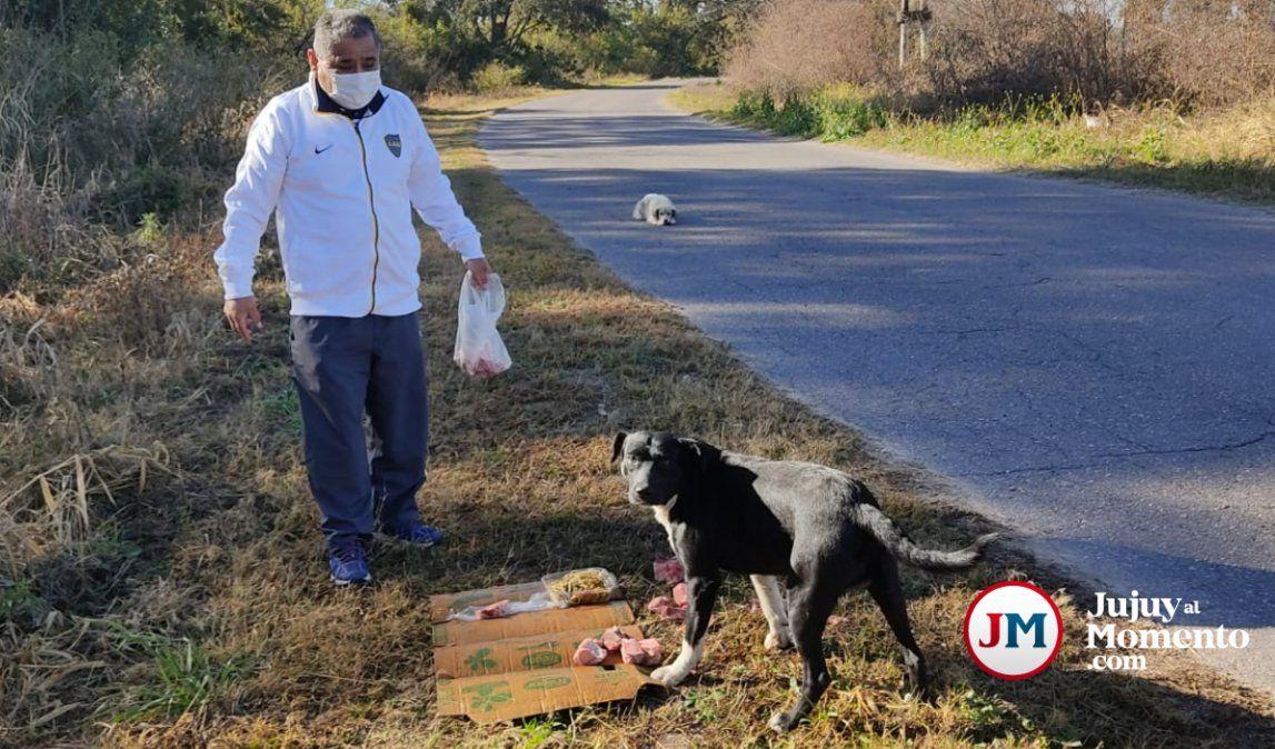 Colectivero palpaleño alimenta a perritos abandonados