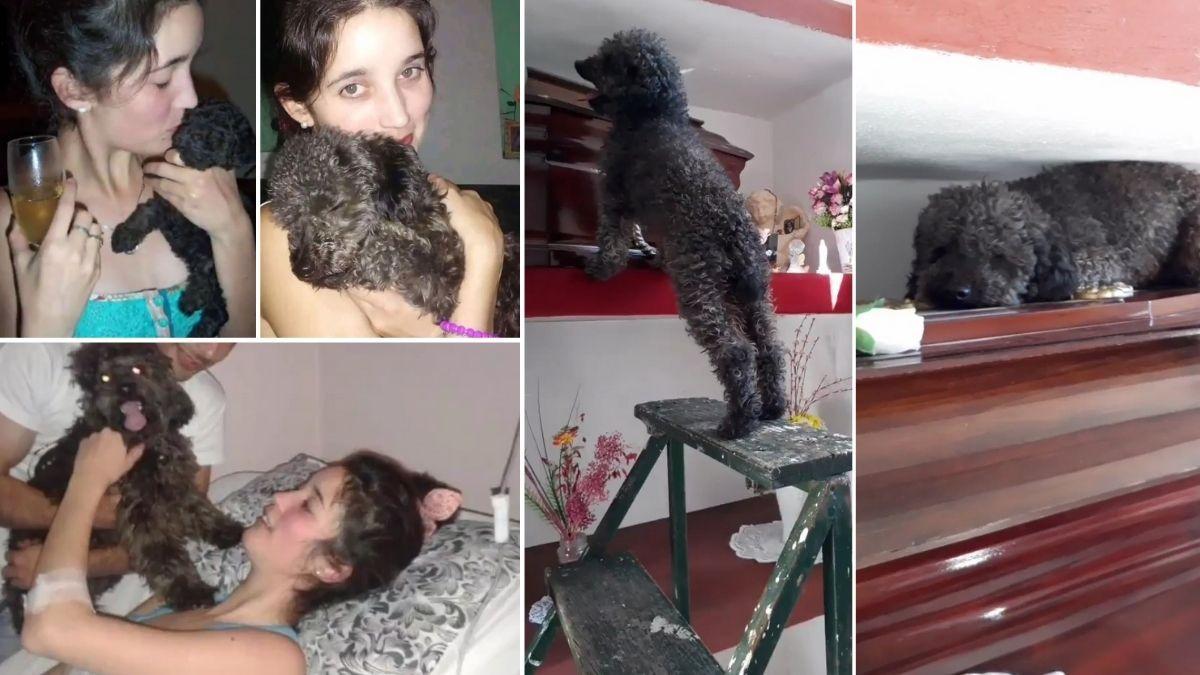 El amor infinito de un perro por su dueña hasta después de vida