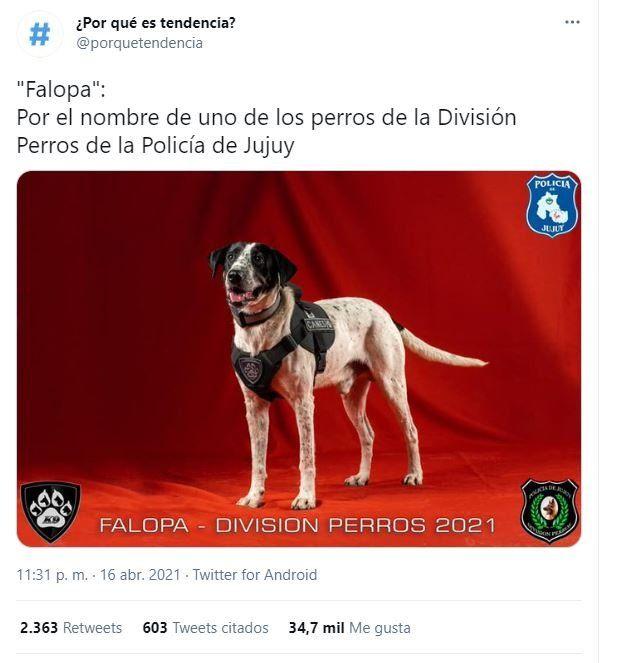 Falopa, el perrito de la policía de Jujuy, fue tendencia en twitter