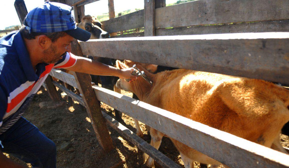 La cuarentena y sus consecuencias en el precio de la carne en Jujuy