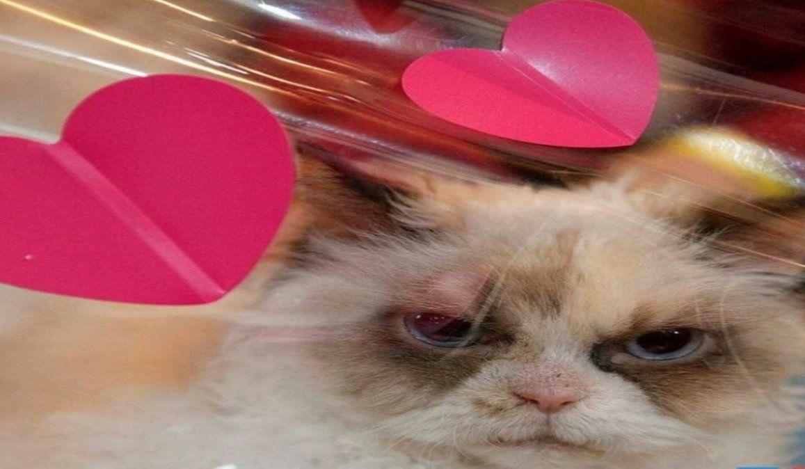 El gatito ANTI SAN VALENTÍN que es viral