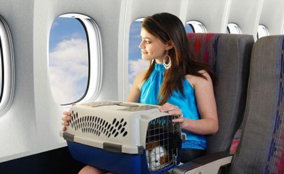 Papeles necesarios para viajar con mascotas