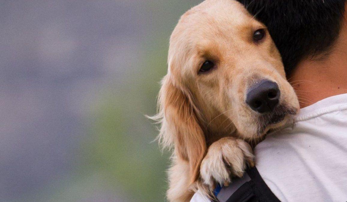 Un proyecto de ley busca promover el cuidado hacia los animales en las escuelas