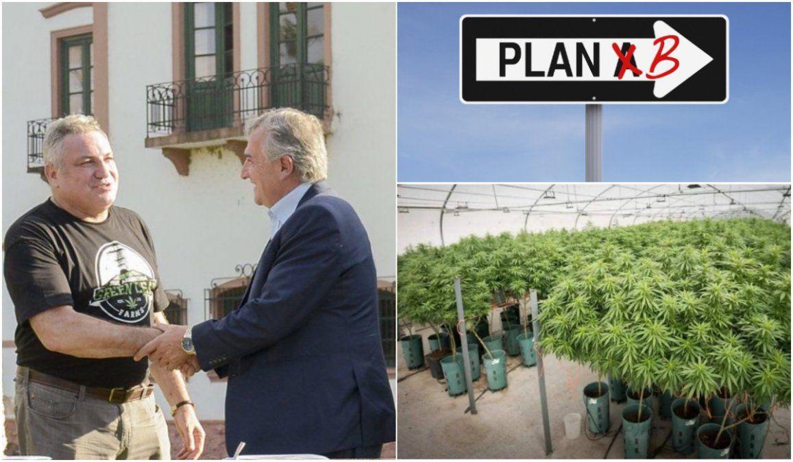 Cannabis medicinal: Tras la quiebra del socio norteamericano, proponen un plan B