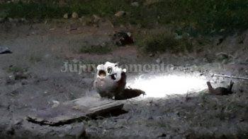 Macabro hallazgo: Encuentran el cráneo de una persona en Campo Verde