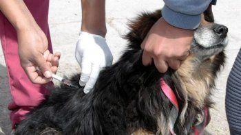 Se retoma la vacunación antirrábica en la zona de Reyes