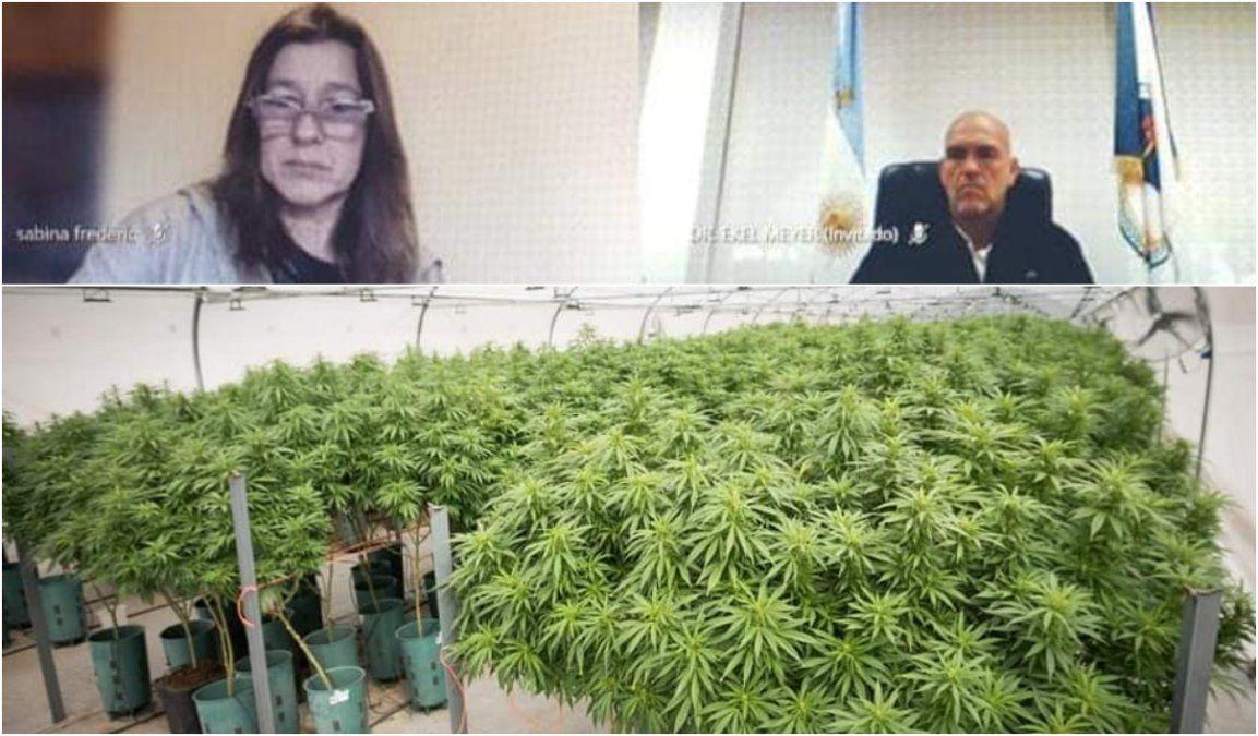 Cannabis medicinal: Jujuy presentó un plan de expansión de 600 hectáreas