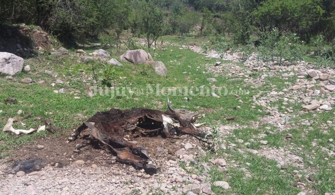 La sequía se cobra la vida de animales: Que dejen llover, nos falta el agua