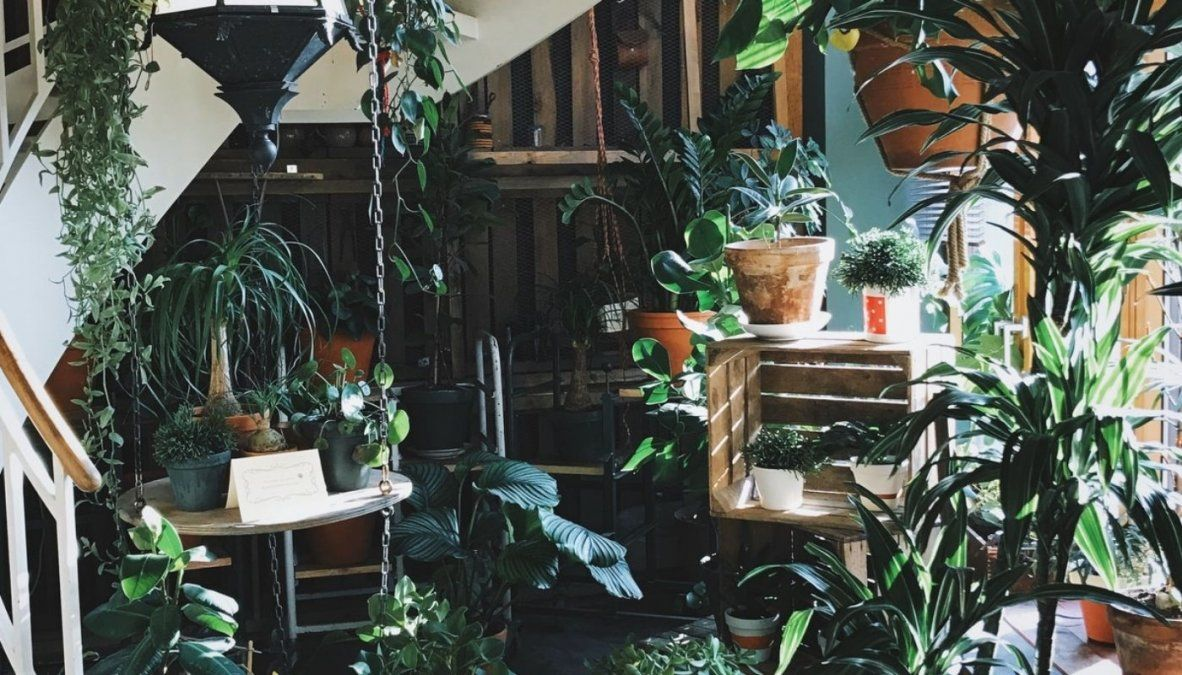¡Atención amantes de las plantas! Estás son las que debes tener en tu hogar según tu mes de nacimiento