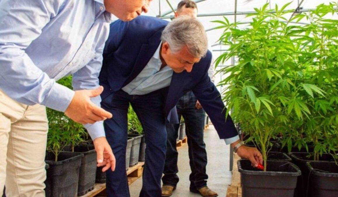 Cannabis medicinal: Tras la suspensión, este miércoles inauguran el laboratorio