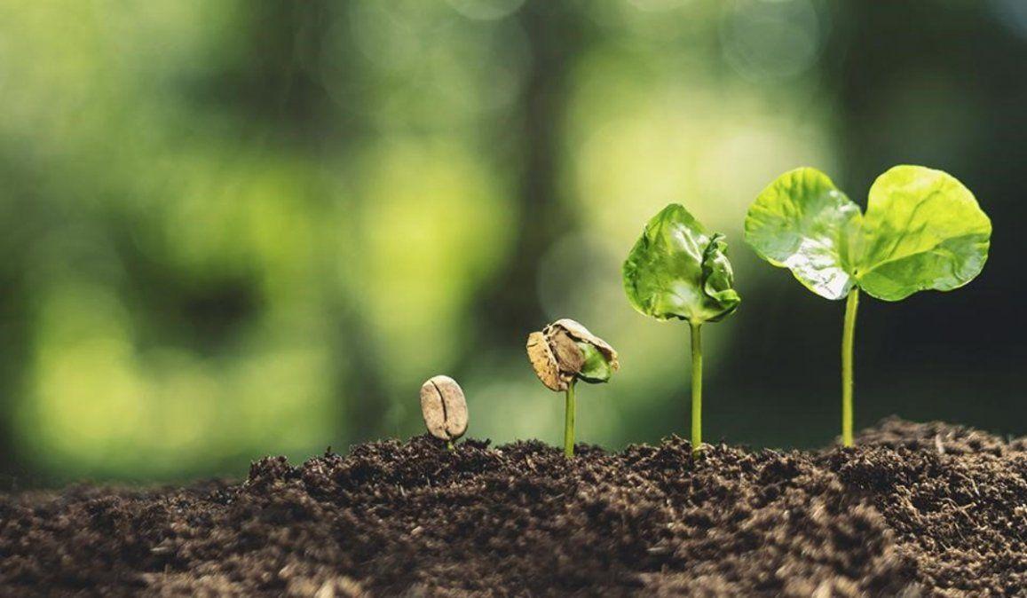 ¿Por qué el 5 de junio se celebra el Día Mundial del Medio Ambiente?
