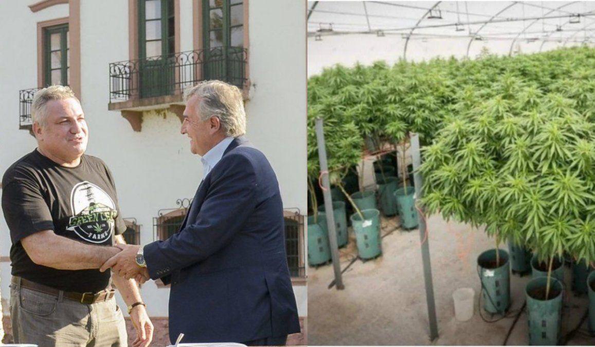 Cannabis medicinal: Dos posturas opuestas sobre un mismo negocio