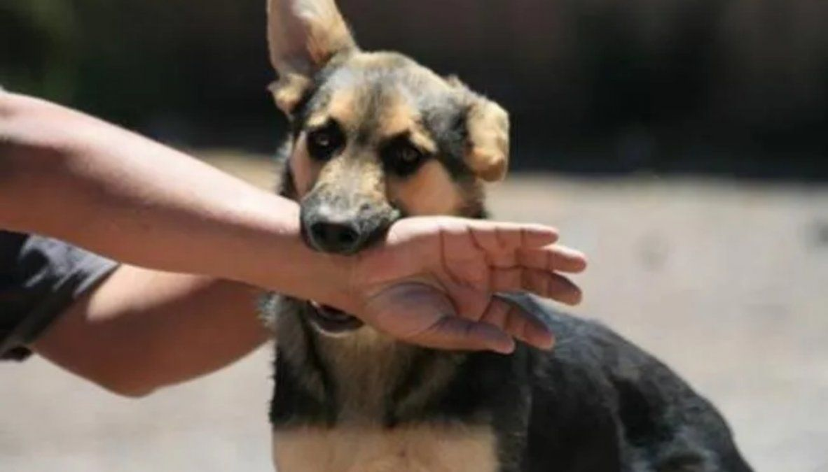 Rabia: qué es, los síntomas y cómo saber si tu mascota la tiene